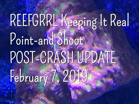 REEFGRRL Keeping It Real - Point-and-Shoot POST-CRASH UPDATE - Some Good News, Some Not So Good