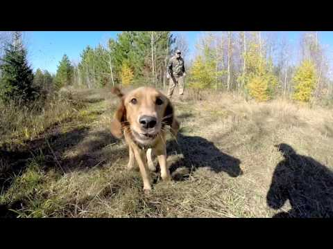Wisconsin Grouse Hunting 2016 GoPro