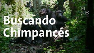 Nuestros parientes más cercanos   Uganda y Ruanda #3