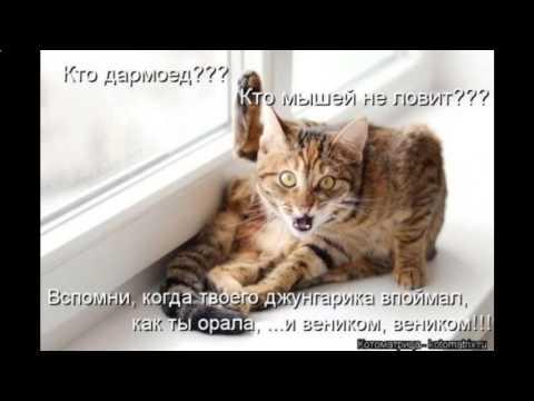 картинки приколы с надписями котов до слез
