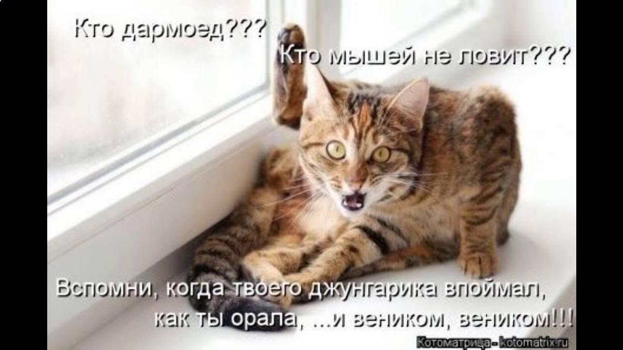 Смешные фото котов с надписями до слез - YouTube