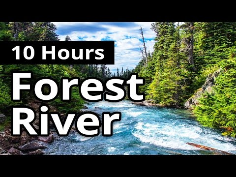 Forest River w/ Birds 10 HOURS for Relaxation  - Water Sleep Sounds  - Meditation