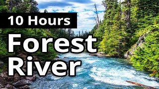 Forest River w Birds 10 HOURS for Relaxation Water