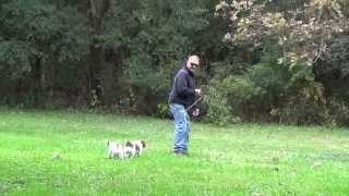 World Class Dog Kennels, Dog Boarding, Milwaukee, Wi.