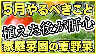 家庭菜園で5月にやるべきこと!6月から夏野菜を収穫するために今すぐやるべき農作業のチェックリスト【初心者向け栽培のコツ】