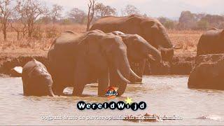 OOGPUNT WereldWijd - op safari in Mikumi