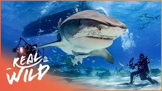 The Incredible Untold Story Of Shark Reef (Shark Documentary) | Of Shark And Man | Real Wild