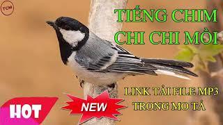 Tiếng chim chi chi ( sẻ đá ) mồi chuẩn 320kbps không có tạp âm, 60 phút