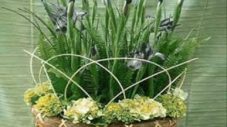 jardineria y paisajismos dany