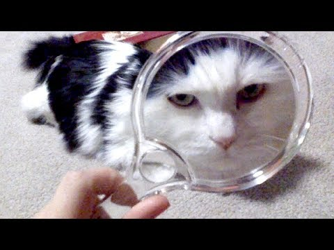 Best of FUNNY ANIMALS – Ultimate TRY NOT TO DIE LAUGHING challenge