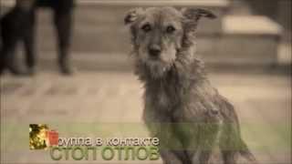 песня бездомных собак