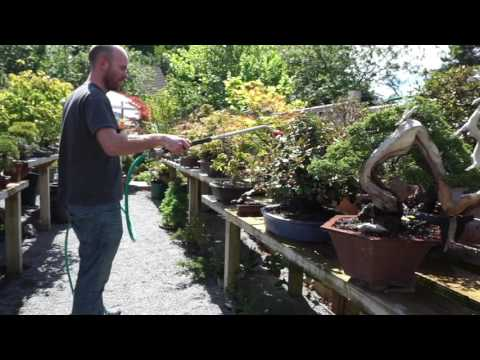 Peter Warren about the European Bonsai San show