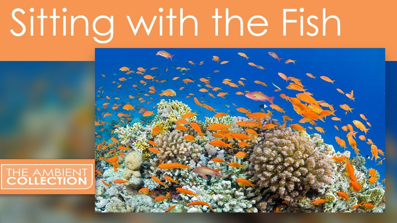 underwater dvd tropical fishes dvd sitting with the fish a