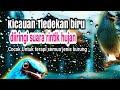 Terapi Air Hujan Diselingi Kicauan Syahduu Untuk Semua Burung  Mp3 - Mp4 Download