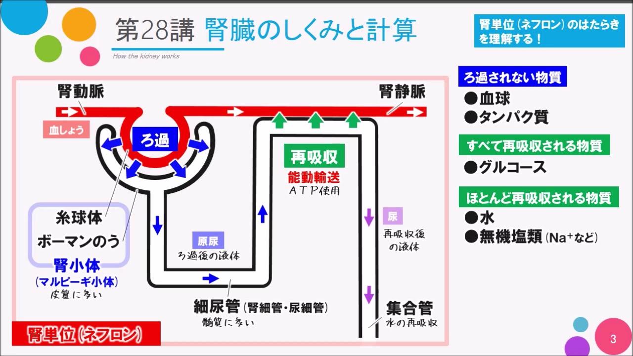 の はたらき 腎臓 NHK高校講座