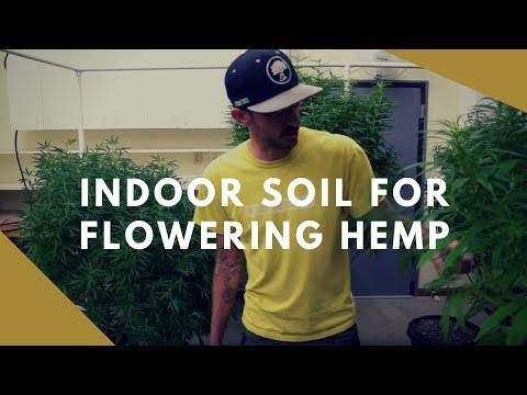 Living Soil for Flowering High CBD Hemp Indoors GROWHEMP Ep. #1