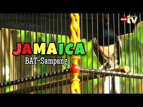 Pakde Karwo Cup VII : Kacer Jamaica BAT BC Sampang