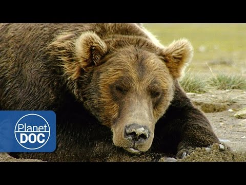 The Land of Giant Bears | Full Documentary - Planet Doc Full