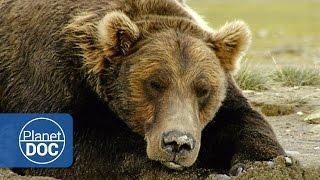 The Land of Giant Bears | Full Documentary - Planet Doc Full Documentaries
