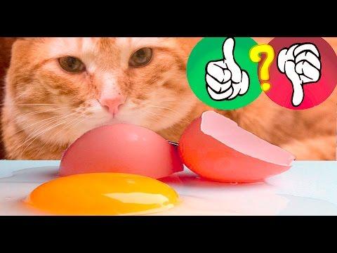 яйцо бегает игра