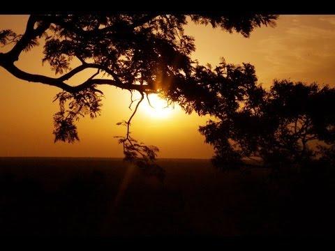 Fotos de: África - Ghana - Parque Nacional de  Mole