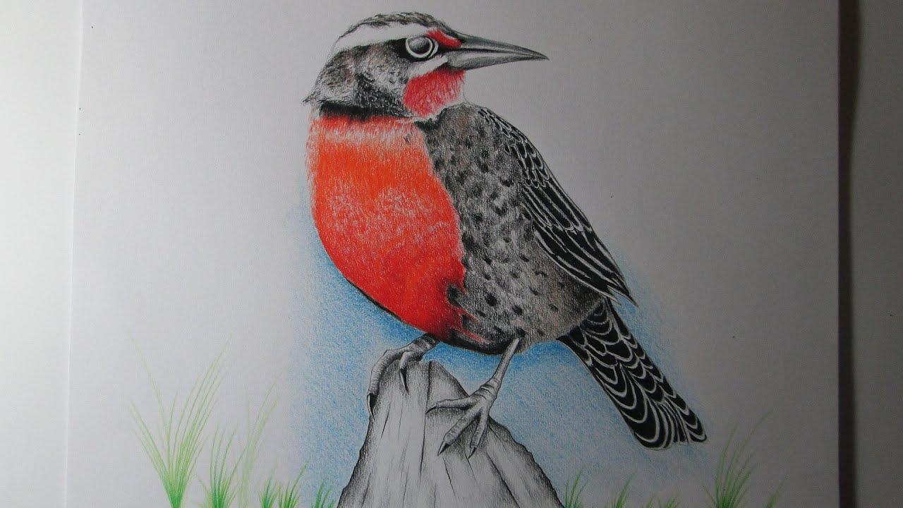 Cómo dibujar un pájaro con lápices de colores paso a paso, aprender ...
