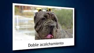 Earcan - Ayuda eficaz contra la otitis canina
