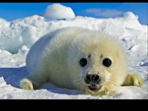 The Seal Lullaby - Eric Whitacre & The Eric Whitacre Singers