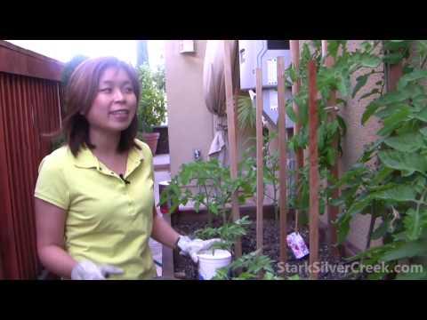 Vegetable Gardening #1: Organic Fertilizer