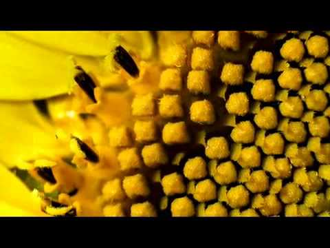 Burt's Bees Colony Collapse Disorder CCD), Honey Bees Dying 5279
