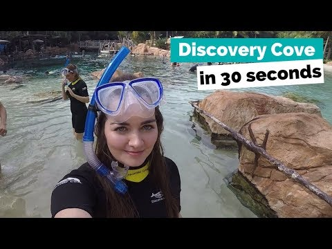 Discovery Cove in 30 Seconds