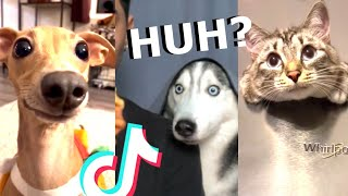 Try Not To Laugh - Funny Animals Special 2020😂😊