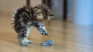 Cats afraid of birds and mice - Funny cat compilation