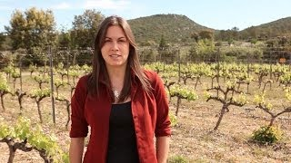 Bliss Wine Imports in the Languedoc-Roussillon region of France
