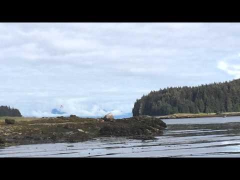 Whale vs Pontoon plane - Angoon Alaska