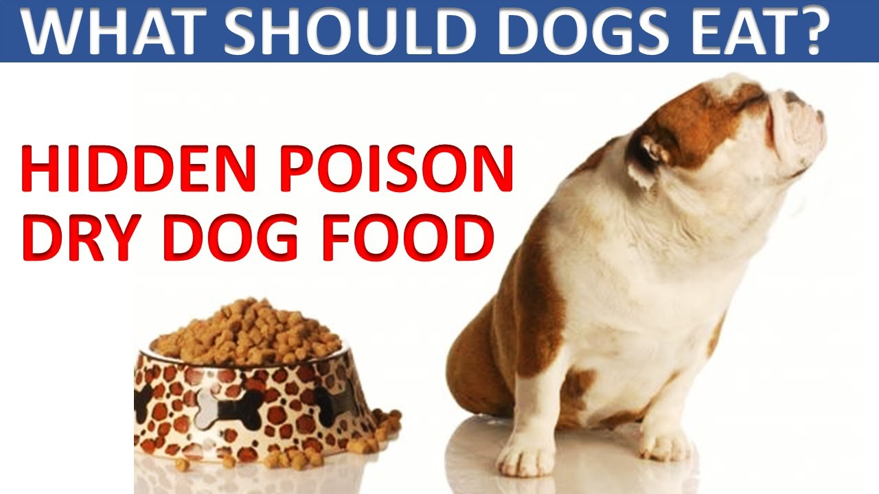 What Should Dogs Eat 2020. Hidden Foods That Kill Dogs. (DRY DOG FOOD)