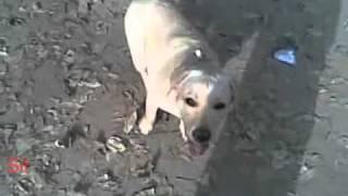 Lady Nirvana Kennels Dog Training