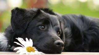 Собаку какой породы лучше завести новичку?