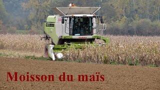 Moisson du maïs 2015 avec Claas Lexion 770