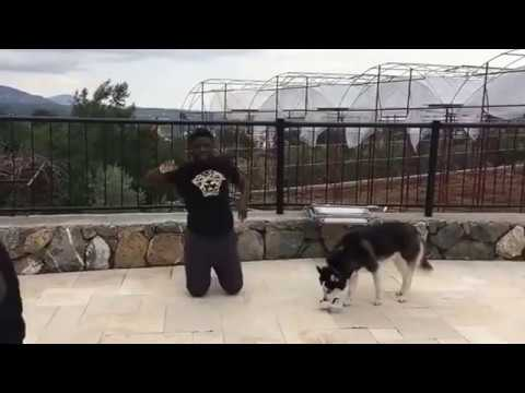 Comedy Video: Crazeclown – Fear of Dog