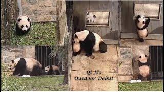 2021-02-16 Xiao Qi Ji's Outdoor Debut ♪♫•*¨*•.¸¸Yay¸¸¸.•*¨*•♫♪