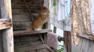 Кошка в душе