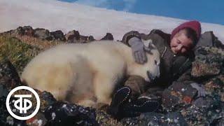 Белый медведь. Фильм Ю.Ледина  (1975)
