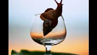 Фестиваль Улитки в Италии. Sagra della lumaca(Sagra della Lumaca• Фестиваль виноградной улитки Что такое «Сагра» или «Феста» ? Каждый регион Италии и даже..., 2015-06-12T13:22:09.000Z)