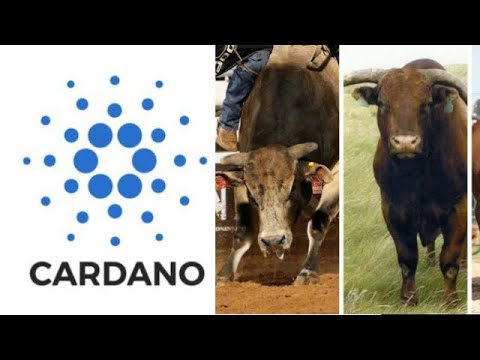 Here is How A Cardano Bullrun Will Lead The Cryptocurrency Paradigm shift Started By Bitcoin