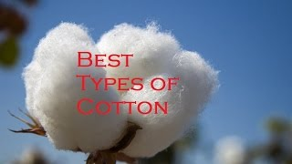Worst and Best Types of Cotton
