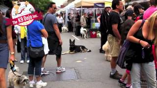 Toronto Woofstock Ultimate Down Stay Dog Training