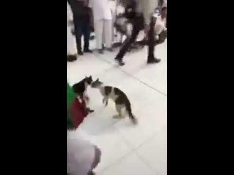 Huge fight in Holy mosque in Makkah