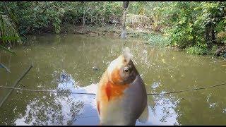 Thanh niên đi câu trộm cá và cái kết .......... SML!