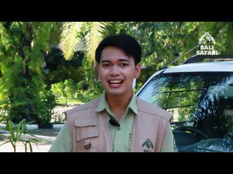 "Ranger's Diary: Bali Safari Park ""The New Normal"""